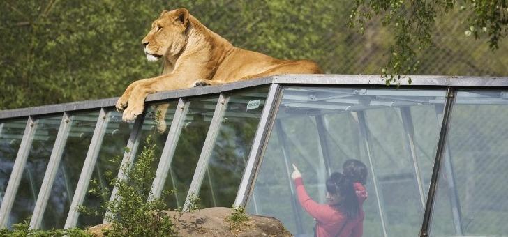 Loisirs Des Groux : Zoo De Thoiry